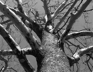 tree-17708
